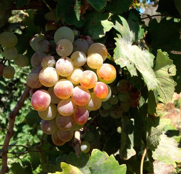 Вкусные вина
